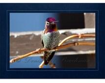 Hummingbird Cards - Anna's Hummingbird Card -Fuschia Purple and Green Hummingbird - Custom Cards - Hummingbird Birthday Cards