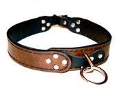 Custom Leather Collar for E. Pecora