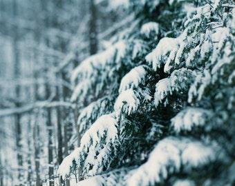 Winter Hush 02 ||| Winter Landscape Photography | Evergreen Trees in Snow |  Nature Photo | Cabin Decor | Winter Nature Photo