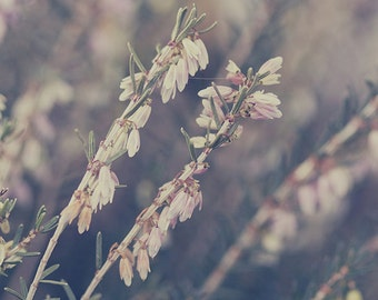 Flower Photography, Photo, Print, Romantic, Blurry, Field, Pink, Green, Vintage, Balance, Web, Flowers, Petals, Fine art Photography, Wall