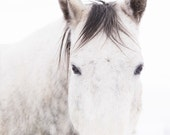 White Horse photography, Close Up horse photograph, White on White