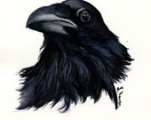 Raven -  Original Watercolor Painting, painted by C.Raven - 8x6inches