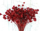 Dried Flowers Brazilian Hill Flower Bouquets Natural and Hand Dyed Supply Florists Floral Supplies Dark Red Bunch of Flowers