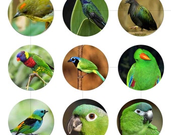 "Digital Images, Green Bird, Animal, Digital Art Print, Digital Collage Sheet, For Pendant, Bottle Caps, 1.5"", 1.25"", 1"", Circles, dcc035"