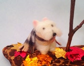Miniature white dog in a Thanksgiving display