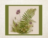 SPECIAL SALE:  Violets and Fern Note Cards