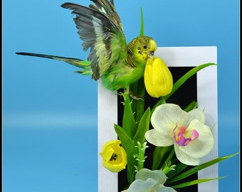 taxidermy of parrot.mounted in  Photo frame, hanging wall or desk display free shipping to everywhere. A#