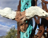 Big Horn Steer Head - Turquoise Eyes -  Cholla Wood - Rustic Ranch Hacienda - One of a kind Artwork