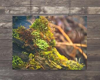 Moss,Nature Photography,Moss Green,Spring,Springtime,ferns,woodland,fresh,zenlike,forest floor,mossy,nature home decor,forest green,zen