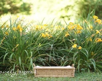 DIGITAL Prop Backdrop - Basket in Daffodil Flowers - Instant Download Newborn Prop Backdrop Background - Digital Newborn Basket Prop