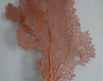 """10.2"""" x 14.5"""" Natural Red Color Sea Fan Seashells Reef Coral"""