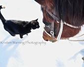 Barn Friends, Horse Photos, Cat Photos, Animals, Friends, Winter, Snow