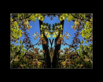 Mirror 1709 16x12_brilliant fall leaves_signed mirrored abstract photography_autumn forest_ Loree Harrell The Mirror Project_ready to ship