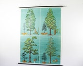 Vintage Chart, 4 Trees, Vintage Pull Down Botanical Chart