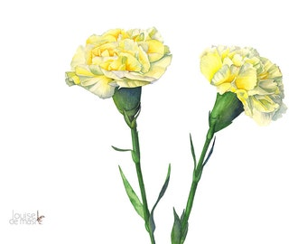 Carnation print, carnation watercolor, carnation painting, A4 size print, C11816, flower painting, flower print