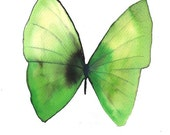 """green butterfly with black 8 X 10"""" original watercolour painting"""