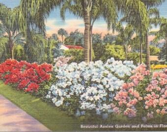 Florida, Azaleas, Garden, Palm Trees - Linen Postcard - Unused (B1)