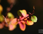 Colourful fall plant on dark background, Nature detail, Orange and black, Fall colours, Autumn Impressions, Macro photogrpahy