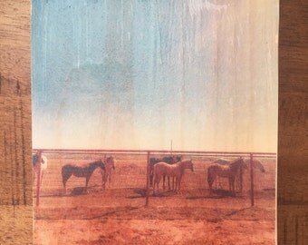 All the Pretty Horses Photo Transfer on Wood