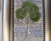 """Vintage Four Leaf Clover Print Good Luck Four Leaf Clover Vintage Botanical Saint Patricks Day Brass Frame, 3 3/4"""" x 4 1/2"""""""