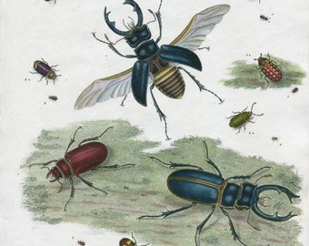 Antique Insect print. Various Beetles From Rees Cyclopedia 1814. Hand coloured Entomology Print. Gift for Natural History Student.