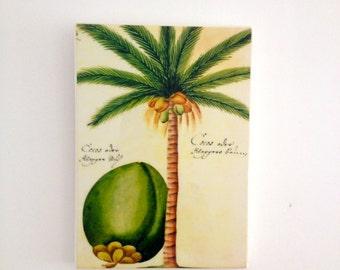 Tropical Coconut Vintage Wall Tile