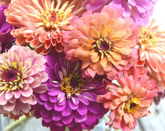 Zinnia Seeds, Heirloom Zinnias, Mixed Pastel Color Zinnia Flowers, Mountainlily Farm Mix, Great for Butterfly Gardens and Cut Flowers