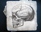 "Vintage skull illustration coasters -  tumbled tile measuring 4"" x 4"". Set of 4"