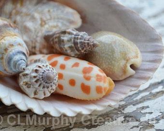 Sea Shells Photography Beach Photography Sea Shells Still Life Bathroom Print 12 x 8 Print