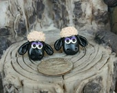 Black sheep studs