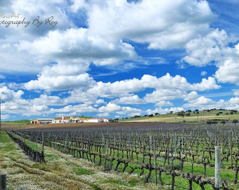Vinyard by Evora Portugal. Original Fine Art Photography. Vivid Portuguese Countryside -European Landscape photo