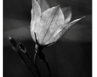 Lovely Glowing Flower in Black and White Macro NAture Photography