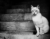black and white photography  the cat waiting - artistic photos etsyitaliateam