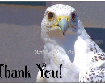 White Falcon Photography Thank You Cards - Greeting Cards - Note Cards. Includes White Envelopes. Blank Inside.