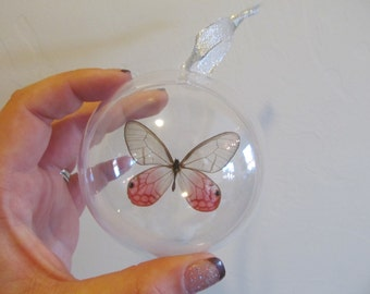 Real Peruvian Pink Cithaeria Glass Clear Wing Butterfly Christmas Ornament Ball Globe Round Gift