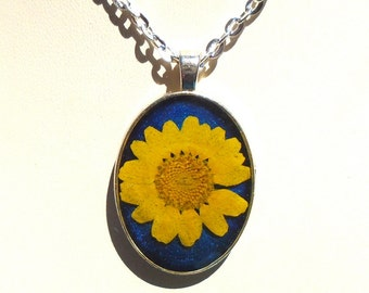 Real Yellow and Blue Daisy Pressed Flower Round Silver Plated Necklace