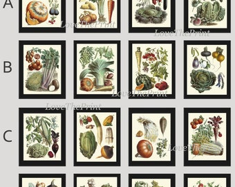 Botanical Vegetable Print Set of 16 Art  Redoute Antique Beautiful Carrot Cabbage Tomato Strawberry Onion Kitchen Dining Room Wall Decor