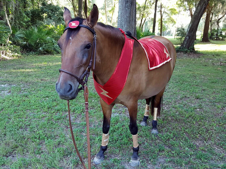Super Hero Costume with Lightning Bolt for Miniature Horse or   Mini Horse Costume