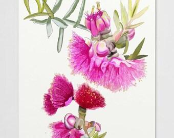 Matted & Signed A4 Print Pink Gumnut Flower Floral Illustration Original Painting Australian Art Lozs Art