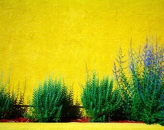 Sage on Yellow Wall