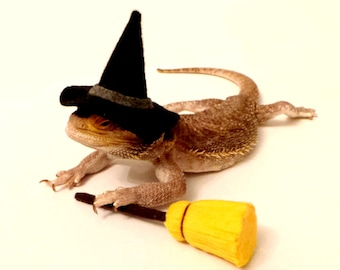 Bearded Dragon Clothing! Witch!
