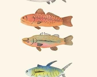 Some Types of Fish // Art Print