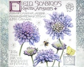 """Scabious flowers and Calligraphy 