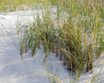 Photograph of Grass on the Dunes of Florida Beach- Print Grass in the Sand - Nature - Wall Art - Photo - Ocean - Sea