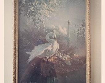 Swan print by Vernon Ward circa 1950's
