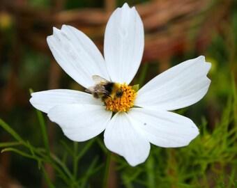 Floral Art Print, Flower Photography, Nature Photography, Bee Art, White Home Decor, Floral Home Decor, Wall Art, Nature Art, Wildlife Art
