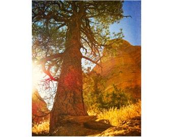 Western Landscape, Southwestern Art, Pine Tree Art, Mountain Art, Vintage Nature Prints, Adventure Art, New Mexico Photography