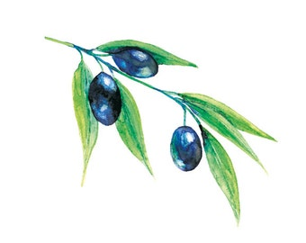 Olives Watercolor Print, Kitchen Art, Fruit Art Print, Botanical Watercolor Painting, Black Olives, Kitchen Wall Decor