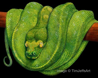 Green Tree Python Colored Pencil Drawing