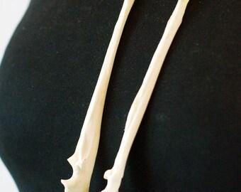 NEW Bone jewellery Fox Ulna Bone Earrings